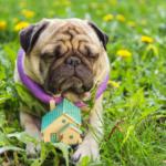 Casetas de perros: Los beneficios